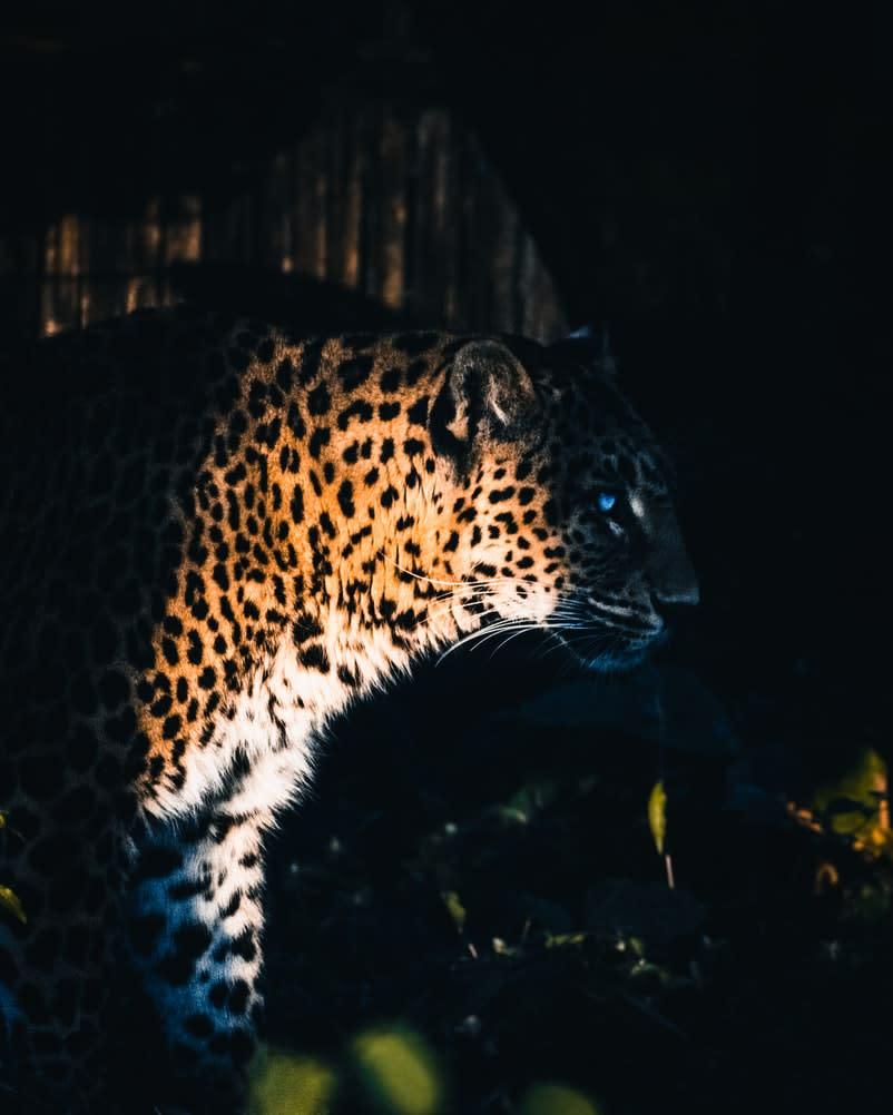 Yggdrasil Partners ReelPlay لإطلاق Jaguar SuperWays من Bad Dingo
